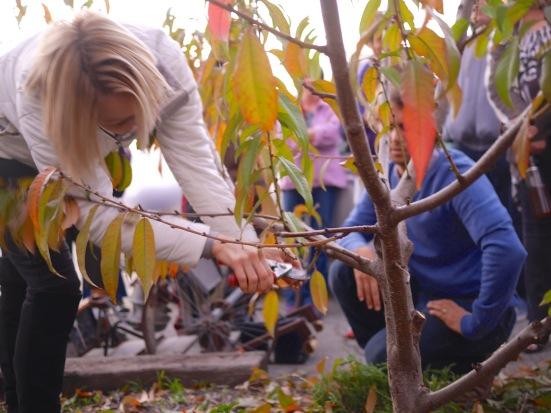GLW_Fruittree_Pruning4LR