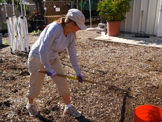 Solana Center, volunteer, clean up, weeds