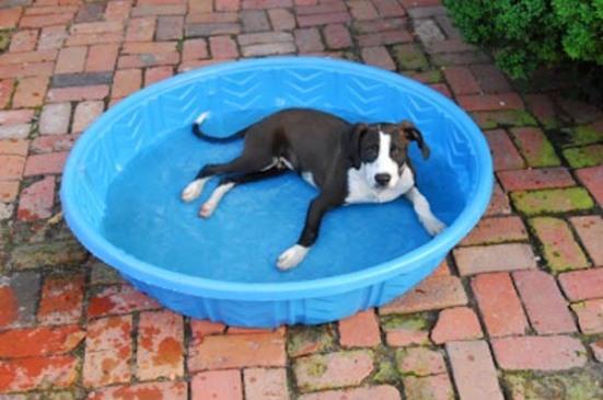 san-diego-summer-dog1
