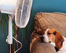 Hound lies in front of fan